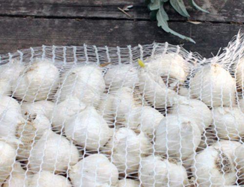 La fermentazione dell'aglio