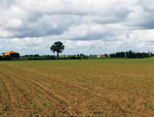 Ecco dove cresce il nostro aglio, 100% made in Italy